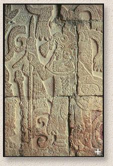 mayarelif2